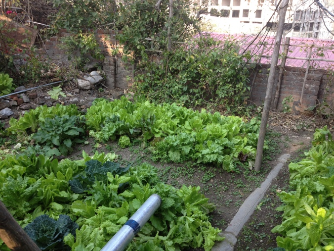 The actual garden at Ramana's Garden. How fresh and delicious does all of that produce look?